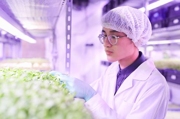 Portrait de jeune homme asiatique examinant les plantes tout en travaillant en serre de pépinière, copiez l'espace