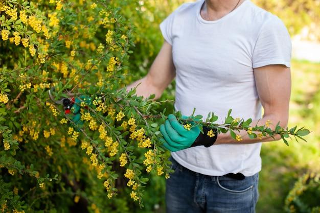 Portrait de jeune jardinier coupe buisson vert.