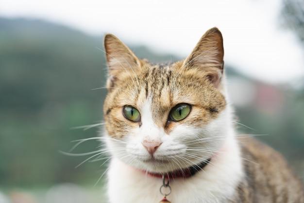 Portrait un joli chat assis devant la maison, un animal mignon et de bonnes habitudes