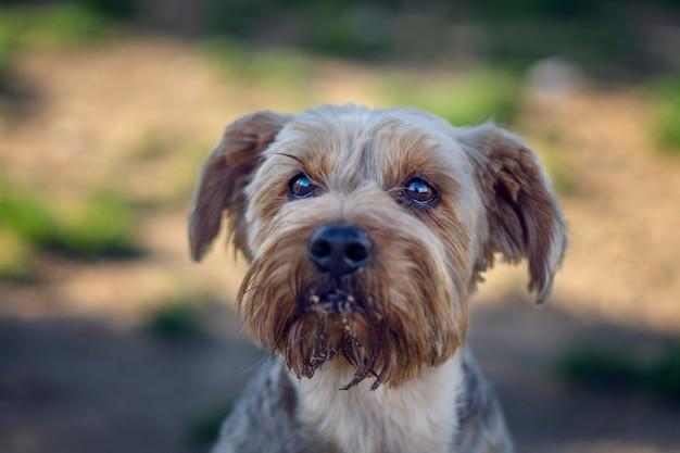 Portrait d'un joli chien dans le parc