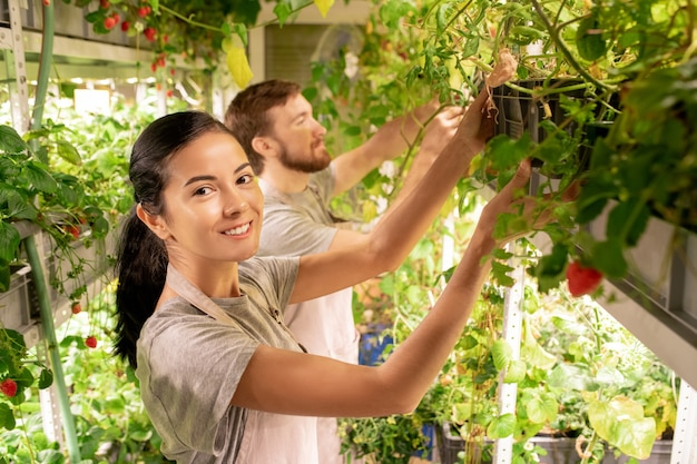 Portrait de joyeuse jeune femme métisse en tablier examinant les semis avec un collègue en serre