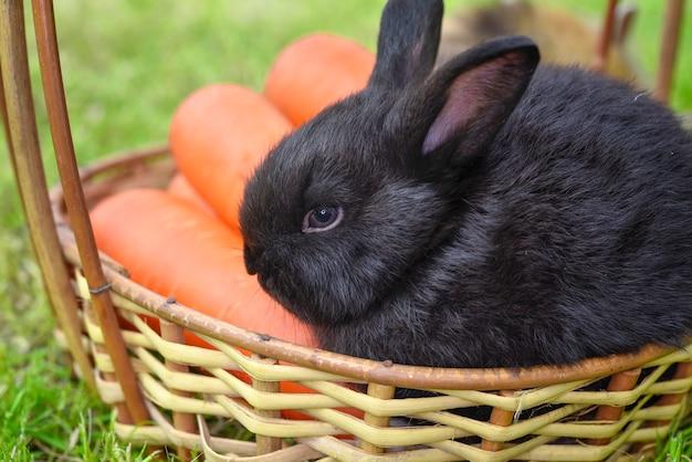 Portrait de lapin mignon avec carotte sur le panier en bois.