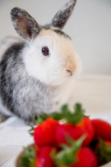 Portrait d'un lapin mignon