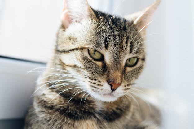 Portrait lumineux d'un chat sur la fenêtre