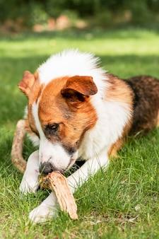 Portrait de mignon chien à fourrure, profitant du temps à l'extérieur