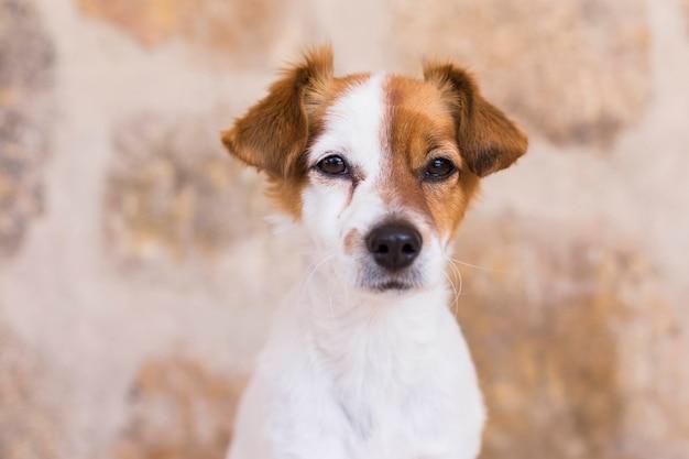Portrait d'un mignon jeune petit chien sur fond de pierre. amour pour les animaux concept. animaux domestiques.