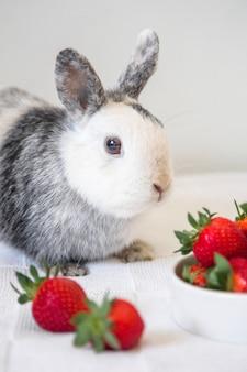 Portrait d'un mignon lapin et fraise