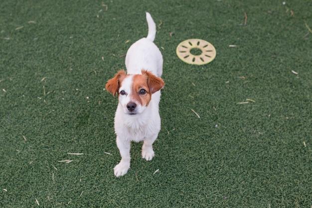 Portrait d'un mignon petit chien assis sur l'herbe verte
