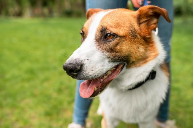 Portrait de mignon petit chien profitant d'une promenade dans le parc