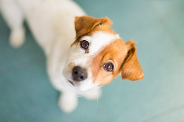 Portrait d'un mignon petit chien
