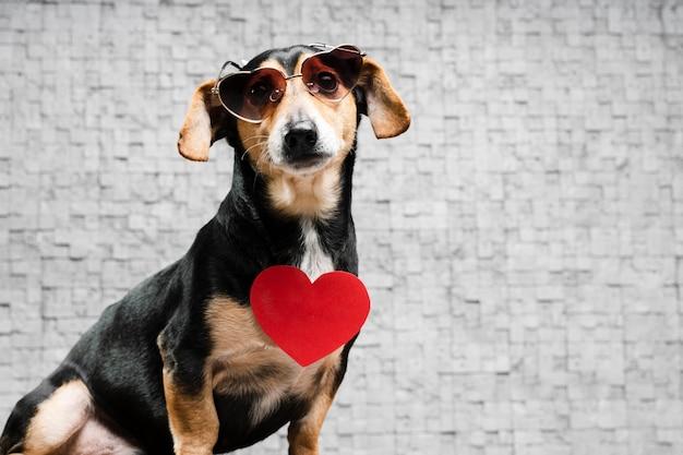 Portrait de mignon petit avec des lunettes de soleil