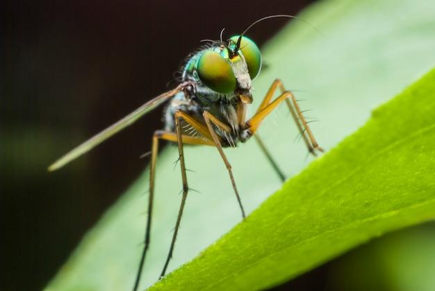 Portrait de mouche super macro
