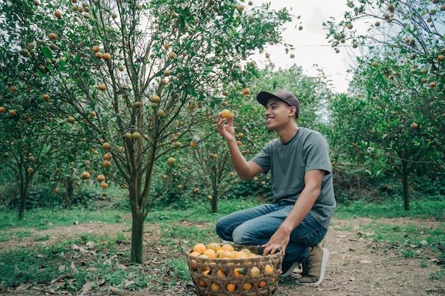 Portrait of happy male farmer récolte des fruits orange dans le champ d'oranger