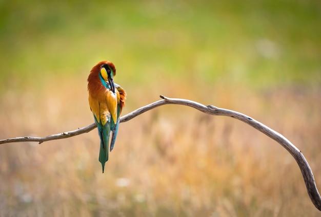 Portrait d'un oiseau coloré