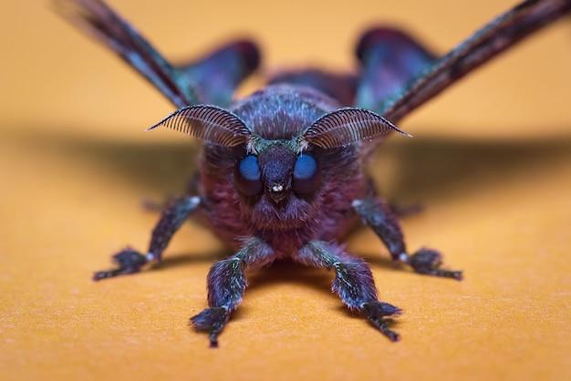 Portrait d'un papillon violet