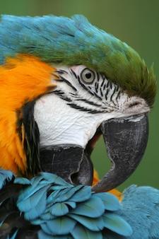 Portrait de perroquet coloré dans un zoo