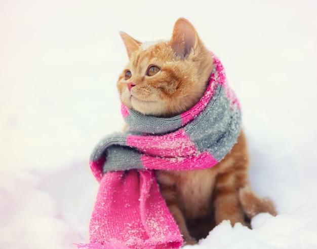 Portrait d'un petit chaton roux vêtu d'une écharpe tricotée à l'extérieur en hiver