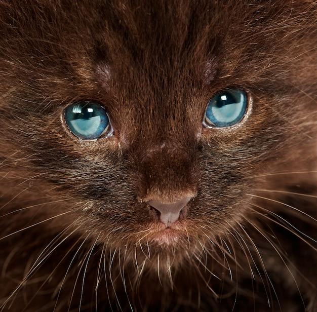 Portrait d'un petit chaton.