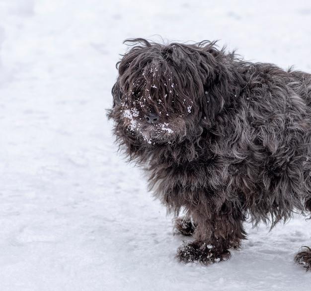 Portrait d'un petit chien noir moelleux