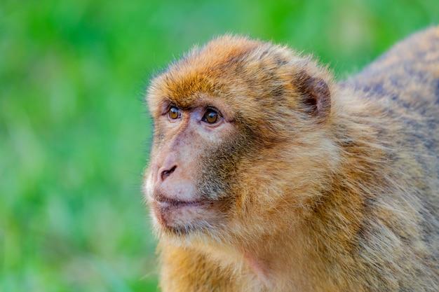 Portrait d'un petit singe