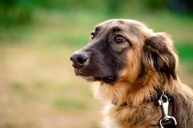 Portrait de plan rapproché d'un chien brun mignon