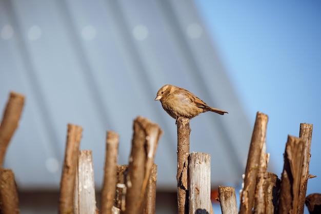 Portrait de printemps d'un oiseau