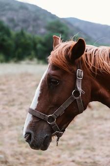 Portrait de profil d'une tête de cheval brun