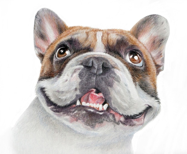 Portrait réaliste d'un heureux bouledogue français. dessin dessiné à la main d'une tête de chien de couleur sable isolé sur fond blanc