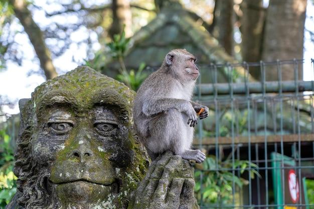 Portrait d'un singe assis sur une sculpture en pierre d'un singe dans la forêt sacrée des singes à ubud, île de bali, indonésie . fermer