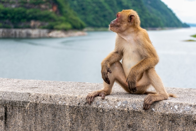 Portrait singe vit dans une forêt naturelle de la thaïlande