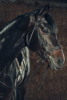 Portrait de tête de cheval