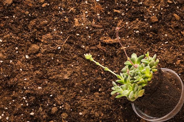 Pose à plat de la plante et de la surface