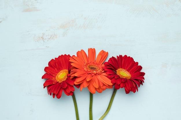 Pose plate de fleurs avec fond