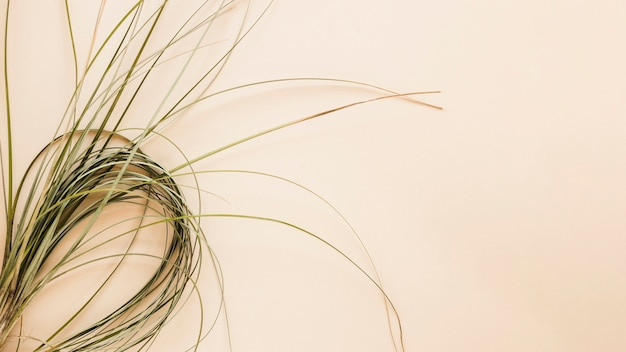 Pose plate d'herbes avec fond