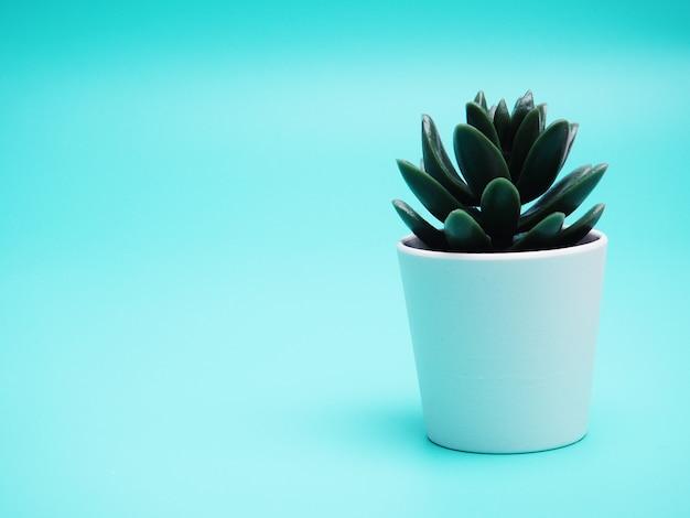 Un pot blanc avec une plante sur fond bleu, nature morte, copie de l'espace.