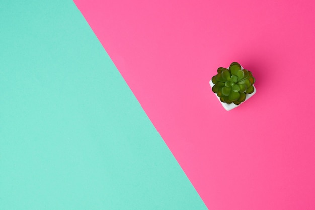 Pot en céramique blanc avec plante sur fond vert rose