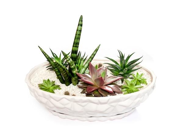 Pot de fleur blanc en céramique avec variété