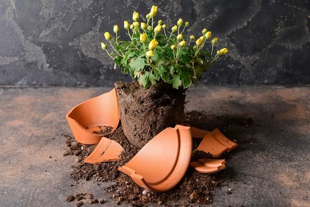 Pot de fleur cassé et plante sur grunge