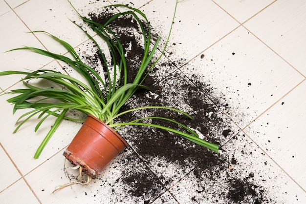 Pot de fleur cassé avec des plantes vertes se trouve sur le sol de la cuisine avec de la saleté partout.