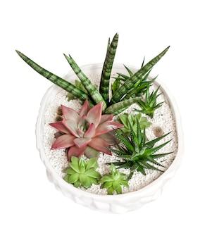 Pot de fleur en céramique blanche avec une variété de plantes succulentes isolées