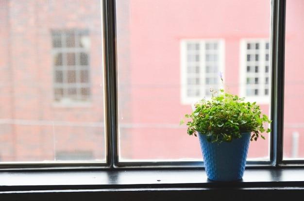 Pot de fleur dans la fenêtre