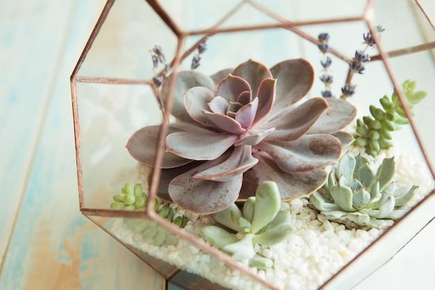 Pot de fleur en verre, forme d'un dodécaèdre avec echeveria et aloès