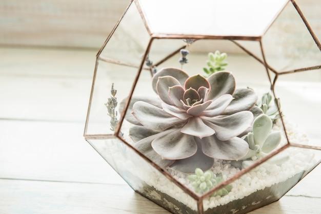 Pot de fleur en verre, forme de dodécaèdre avec echeveria et aloès