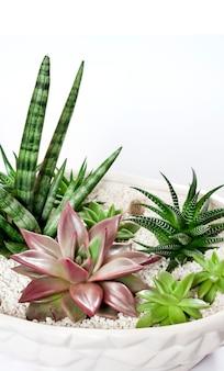 Pot de fleurs en céramique blanc avec une variété de plantes succulentes