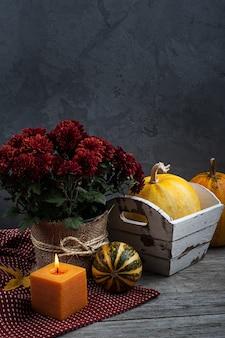 Pot de fleurs de chrysanthèmes rouges