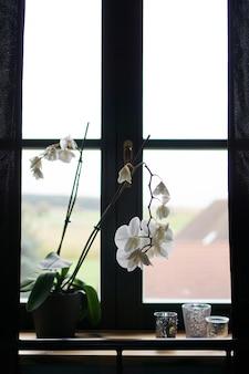 Pot de fleurs près d'une grande fenêtre. orchidée blanche sur le rebord de la fenêtre. rideaux noirs - matin