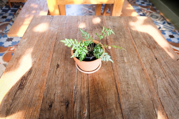 Pot de fleurs sur une table en bois, fond pour hôtel de villégiature vintage