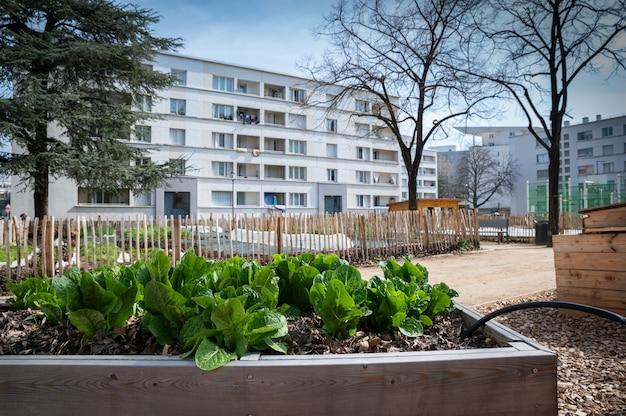 Pot de légumes de jardinage. potager en terrasse. salades poussant dans un conteneur dans un quartier urbain