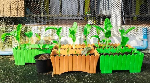 Pot de légumes verts pour vous-même nourriture et activité hobby en vacances