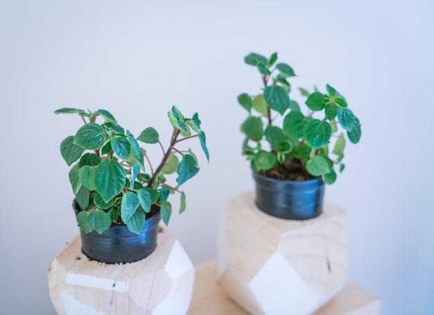 Pot petite plante